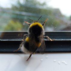 c90f5e40e0ee9dd38e9f86d512f58961--busy-bee-beekeeping